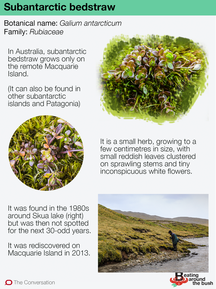 How I stumbled on a lost plant just north of Antarctica