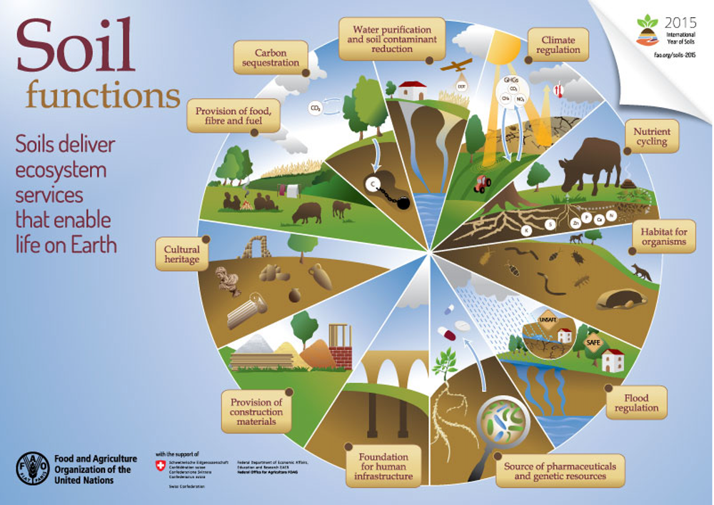 Soil is the key to our planet's history (and future)