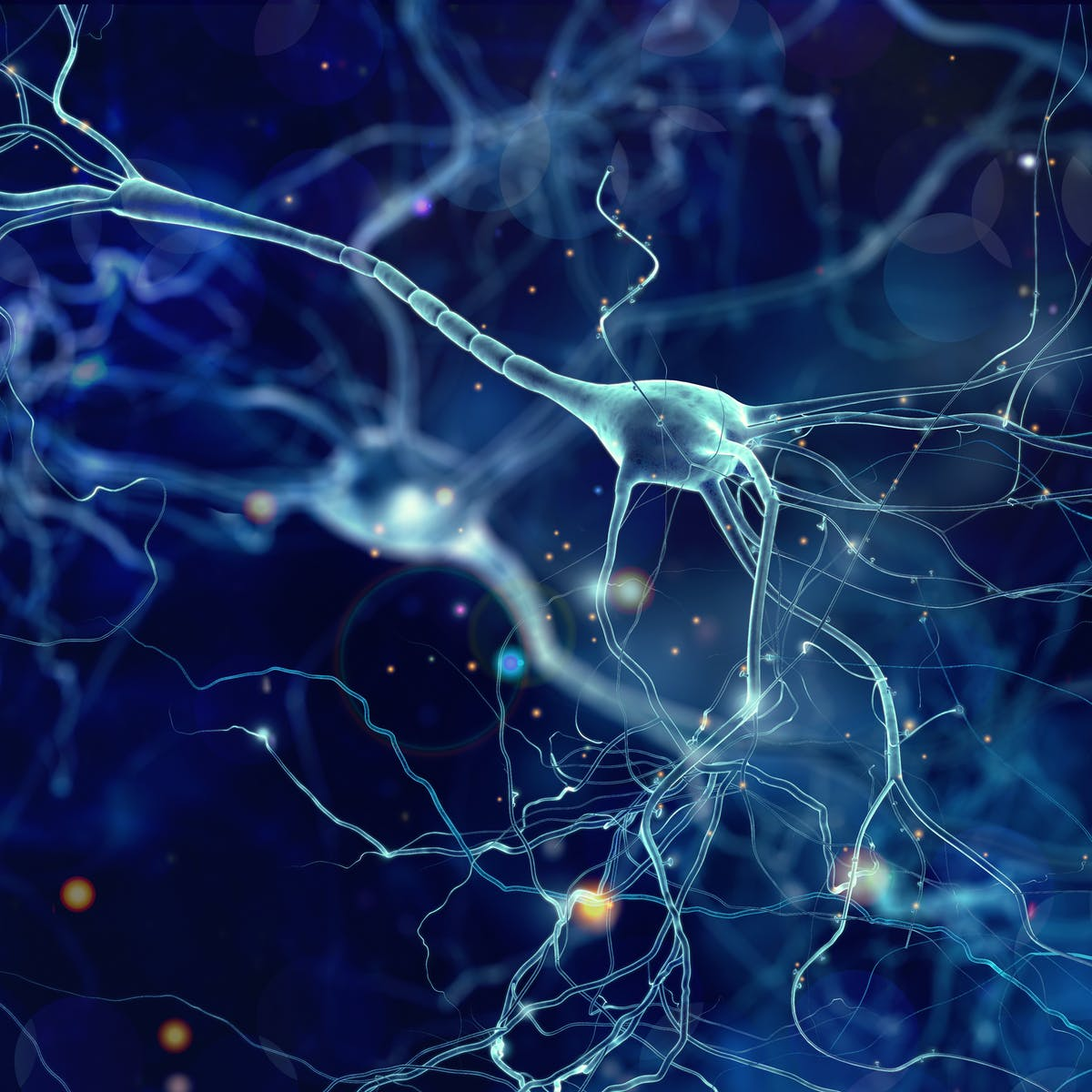 Research Identifies Complex Of Neurons >> New Autism Research On Single Neurons Suggests Signaling