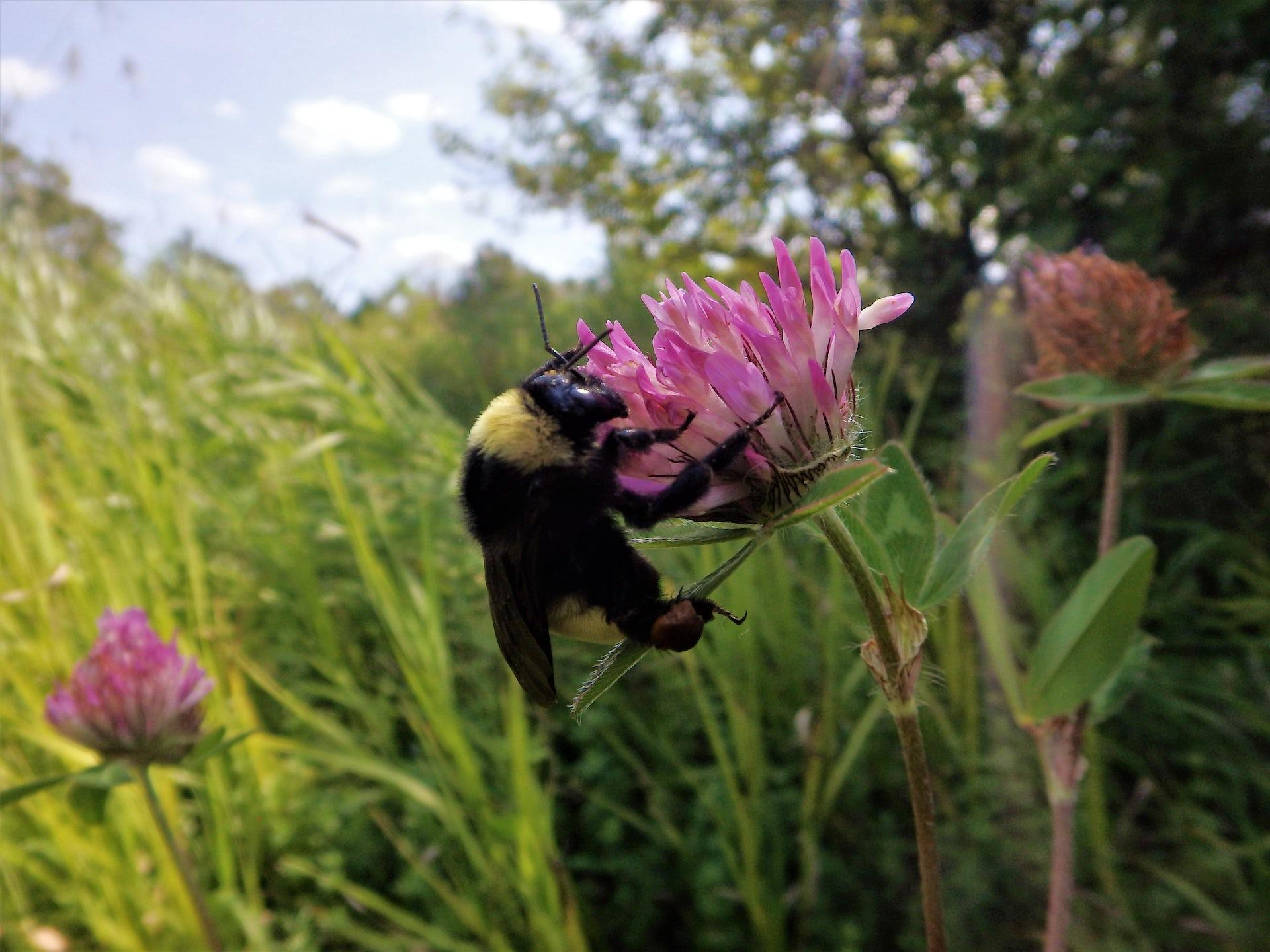 Il faut sauver les abeilles! On ne peut pas se permettre de perdre nos pollinisateurs naturels