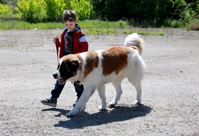 the evolution of dog breeding