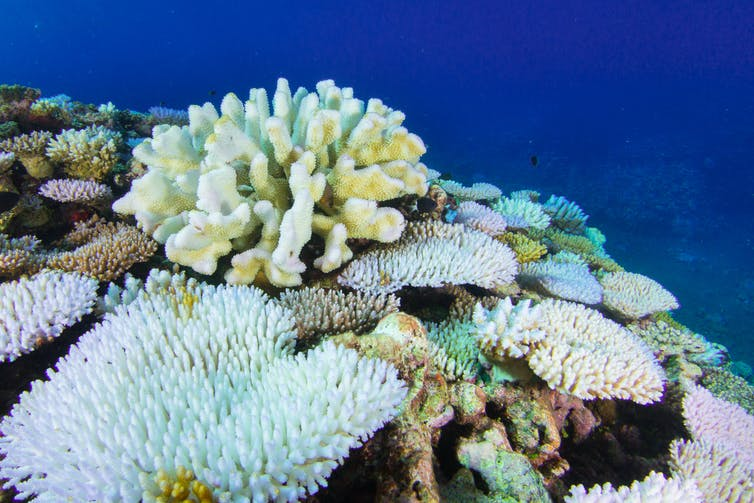 some Western Australian reefs have the lowest coral cover on record