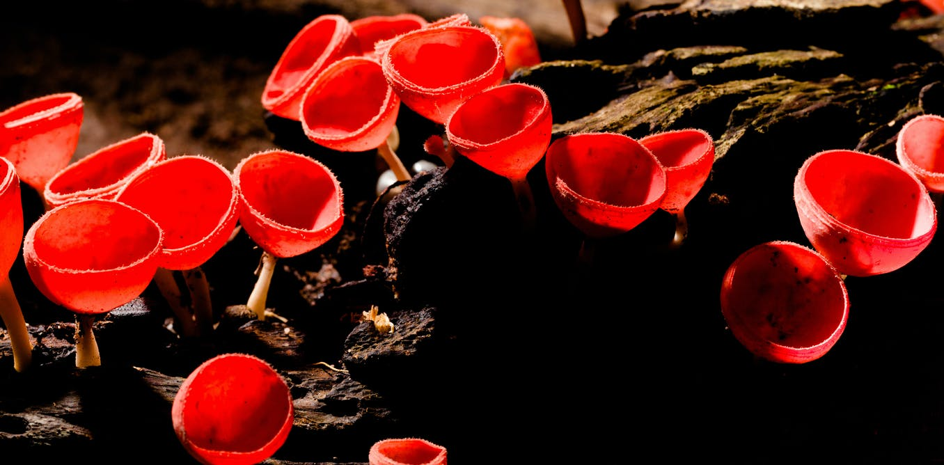 Complex life may only exist because of millions of years of groundwork by ancient fungi