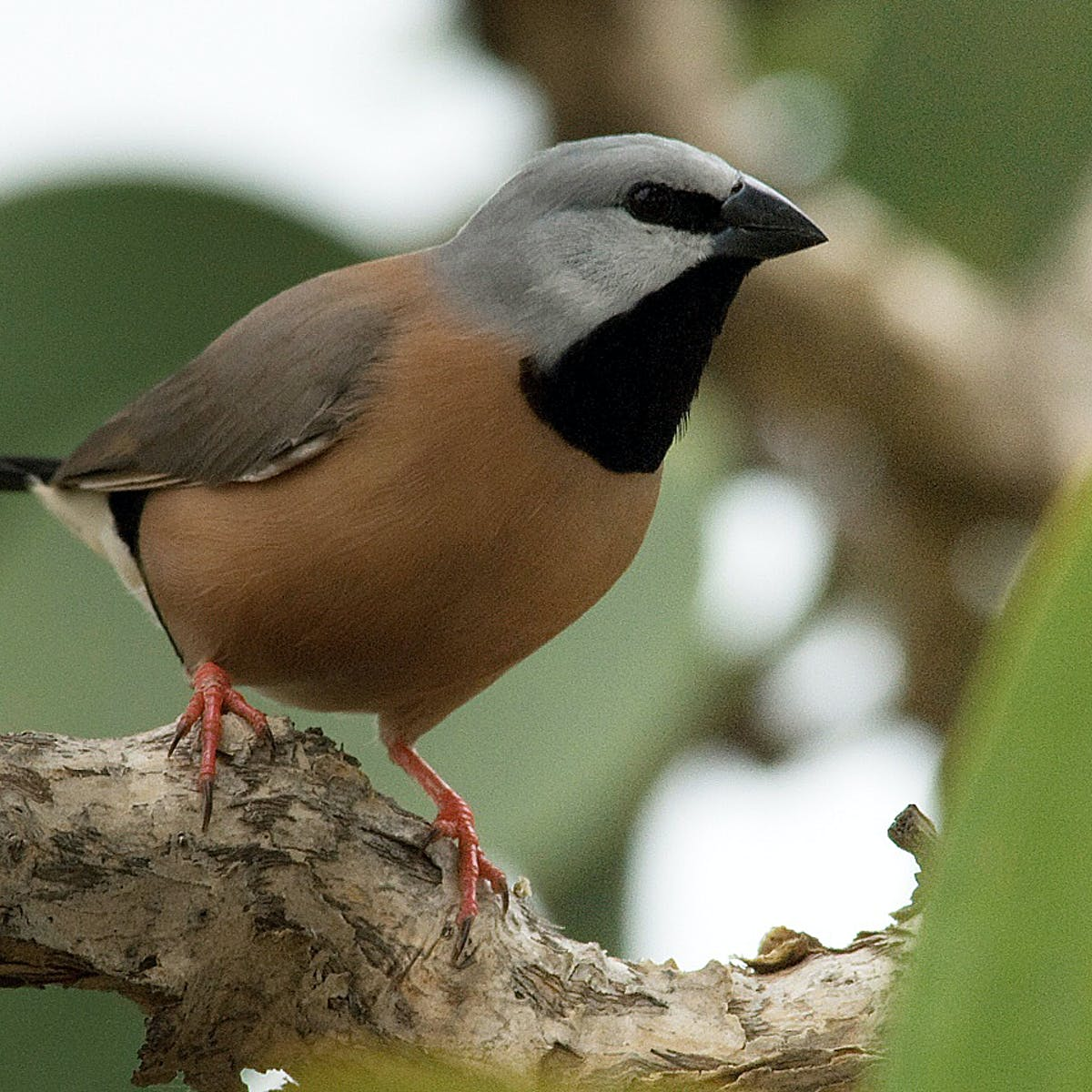 Adani's finch plan is approved, just weeks after being sent