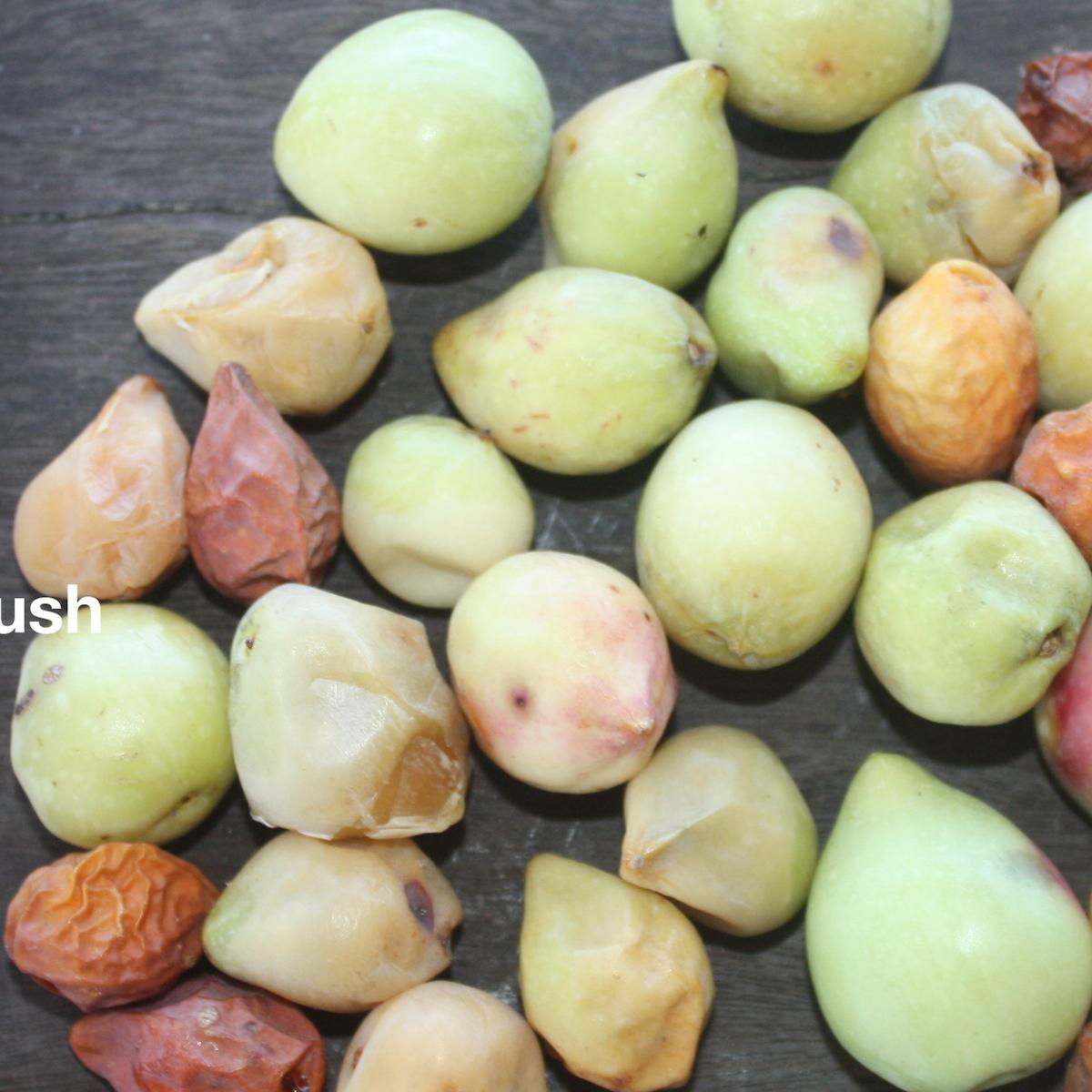 Meet The Kakadu Plum An International Superfood Thousands Of