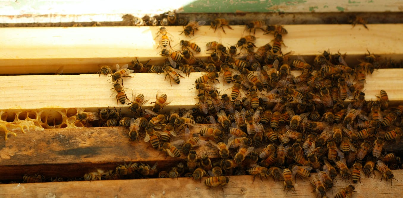We taught bees a simple number language – and they got it