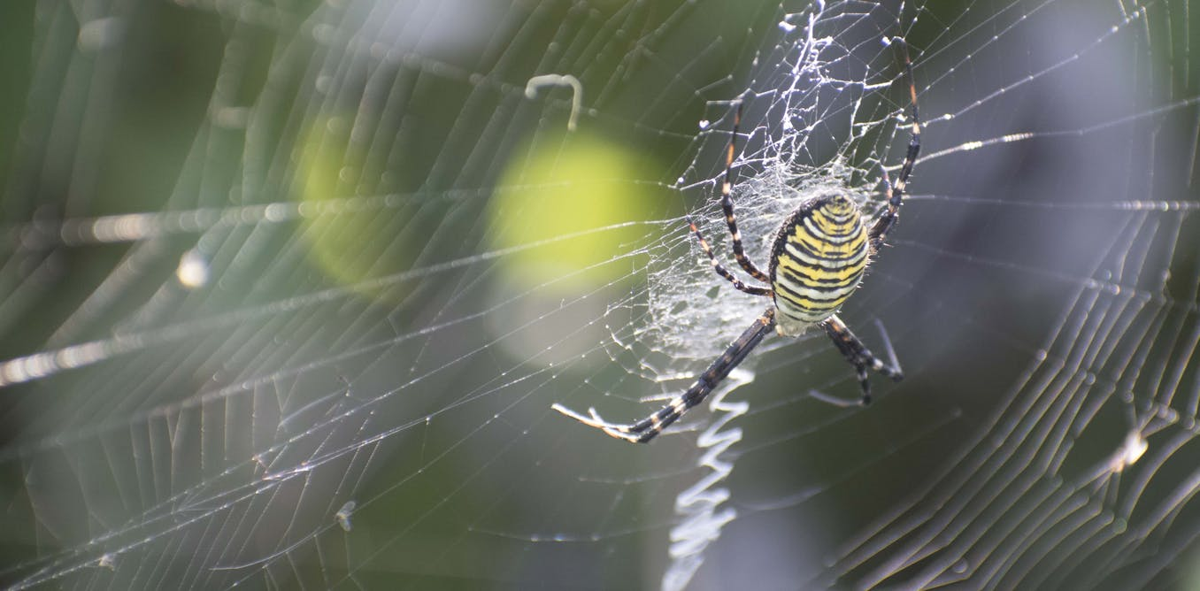 Spider glue's sticky secret revealed by new genetic research