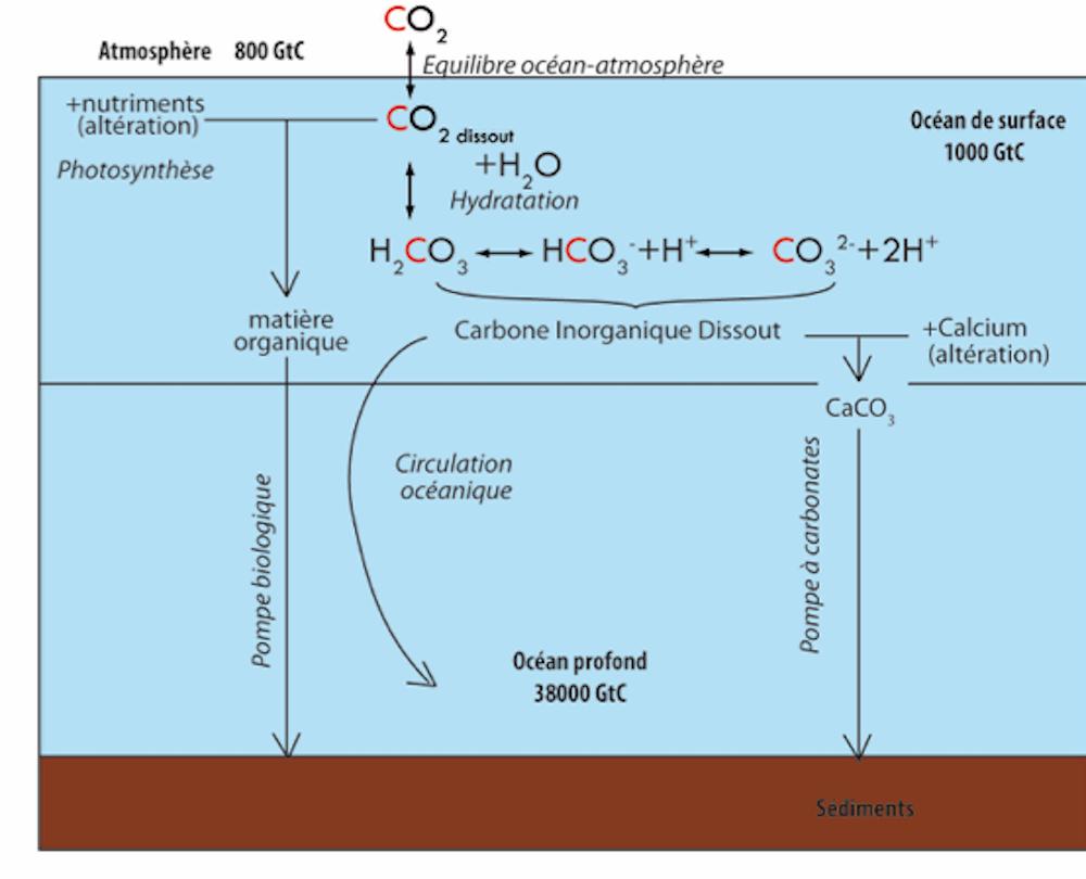 L'acidification des océans : processus chimique