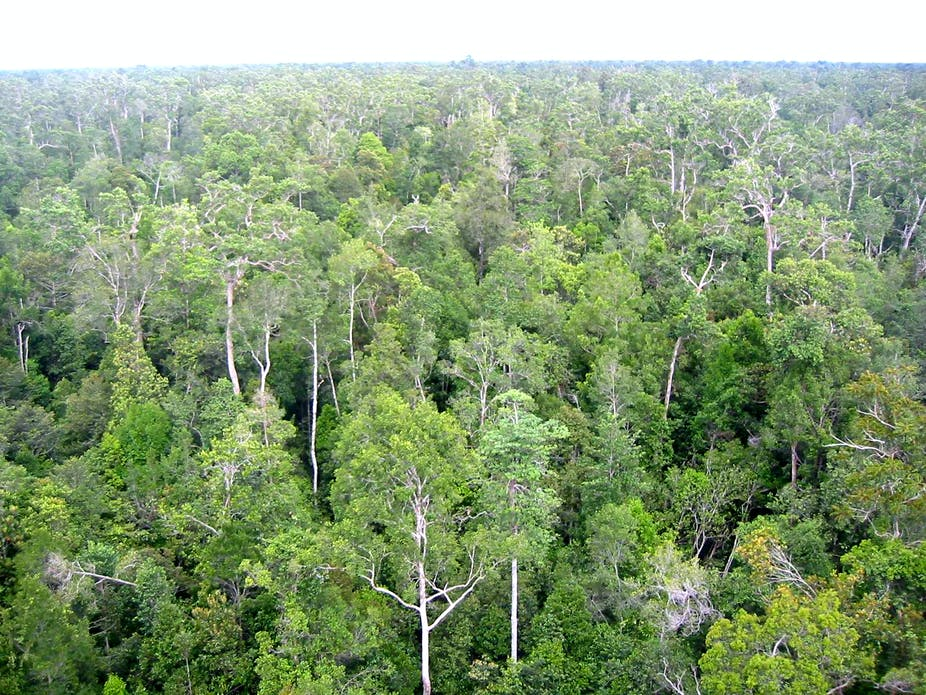 As temperatures rise, tropical forests absorb less CO2