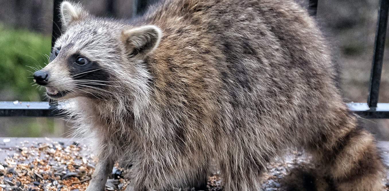 How to handle raccoons, snakes and other critters in your yard (hint: not with a thermos)