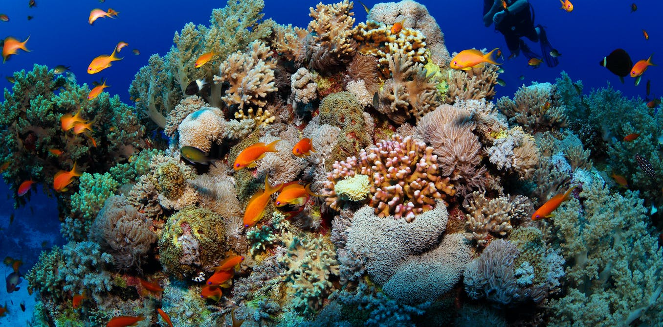 Seaweed and sea slugs rely on toxic bacteria to defend against predators