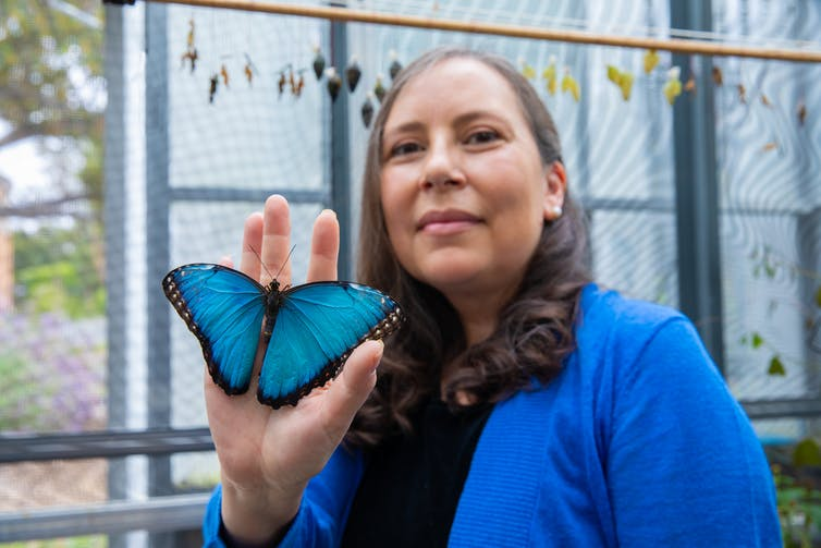 Adriana Briscoe, in the greenhouse with a blue morpho, University of California, Irvine, June 2019. Wes Koseki - UCI School of Biological Sciences, CC BY-SA