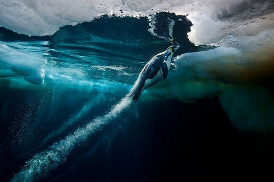 southern ocean life is unique and needs protection