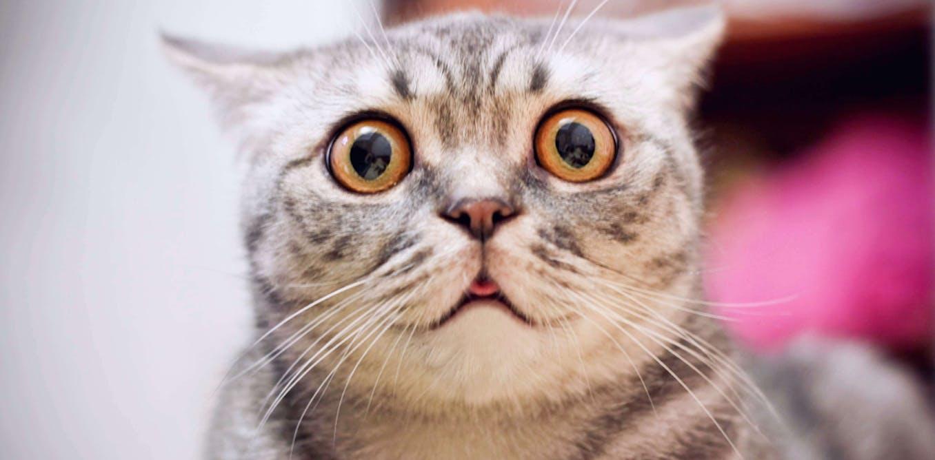 Cat muzzles: cruel or useful?