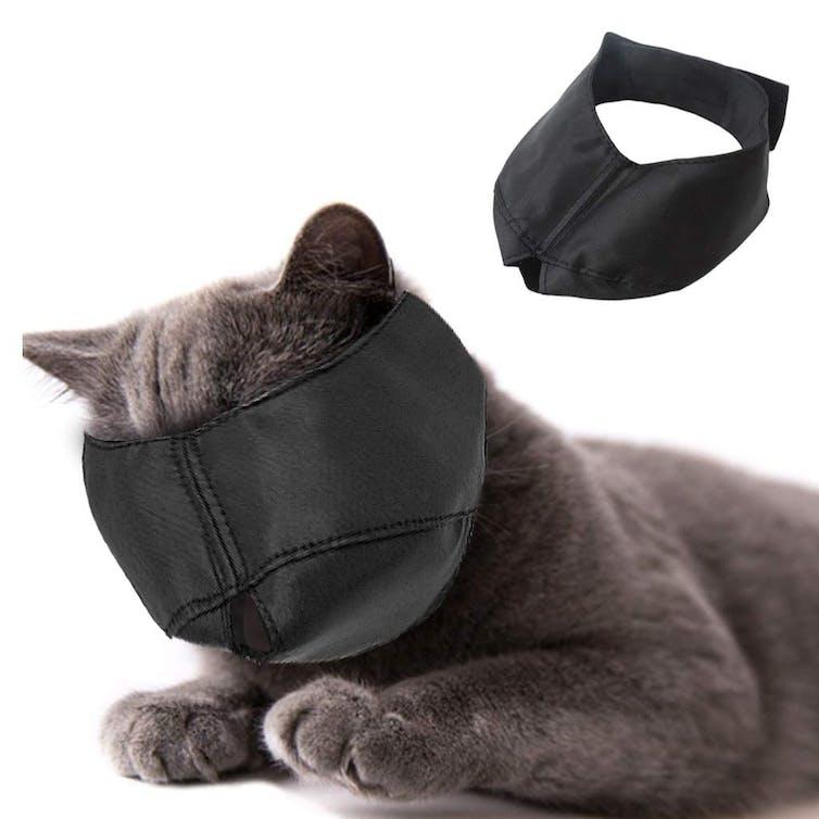 file 20190618 118518 1o23aaz.jpg?ixlib=rb 1.1 - Cat muzzles: Cruel or useful?