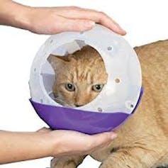 cat in a muzzle