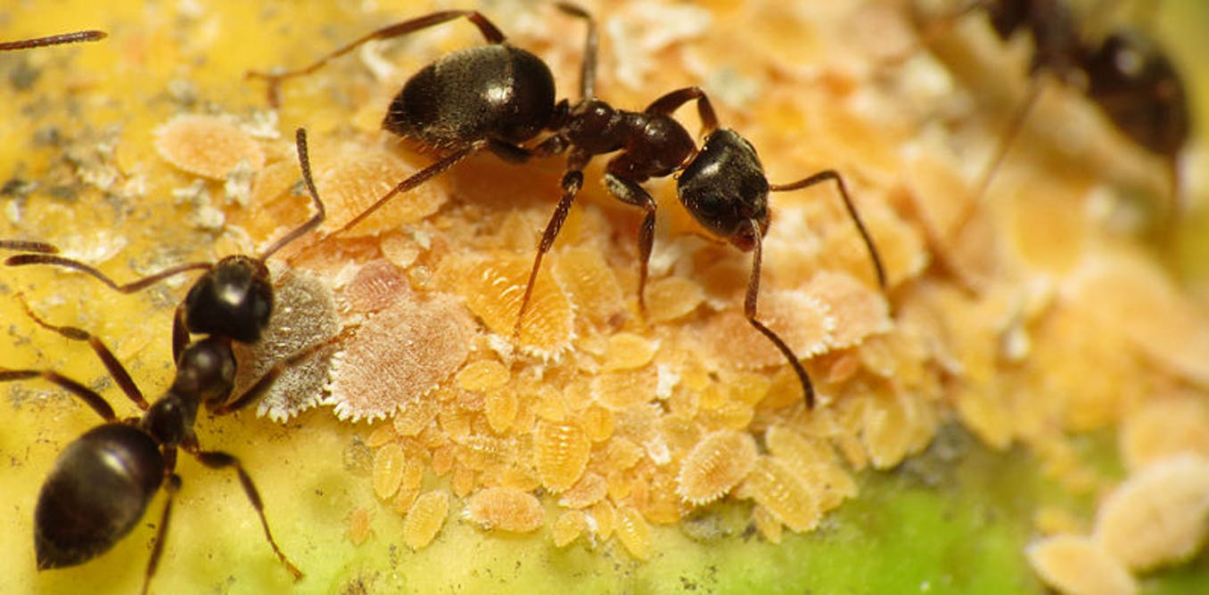 Six Amazing Facts You Need To Know About Ants