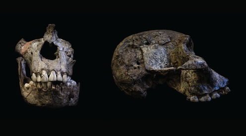 Teeth 'time capsule' reveals that 2 million years ago, early humans