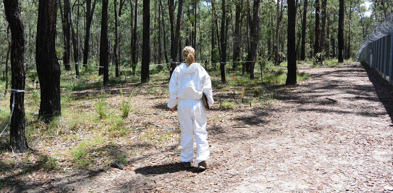 'This is going to affect how we determine time since death': how studying body donors in the bush is changing forensic science