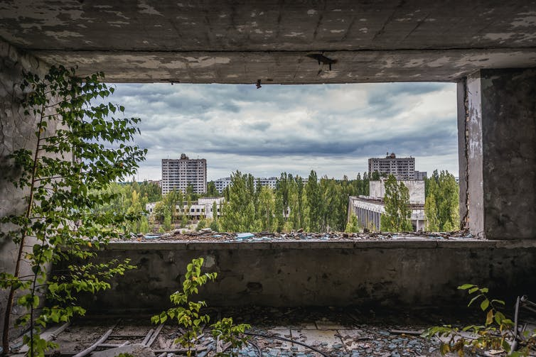 In the wake of Chernobyl, plants thrive    Cosmos
