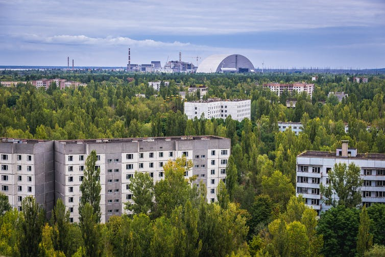 In the wake of Chernobyl, plants thrive.