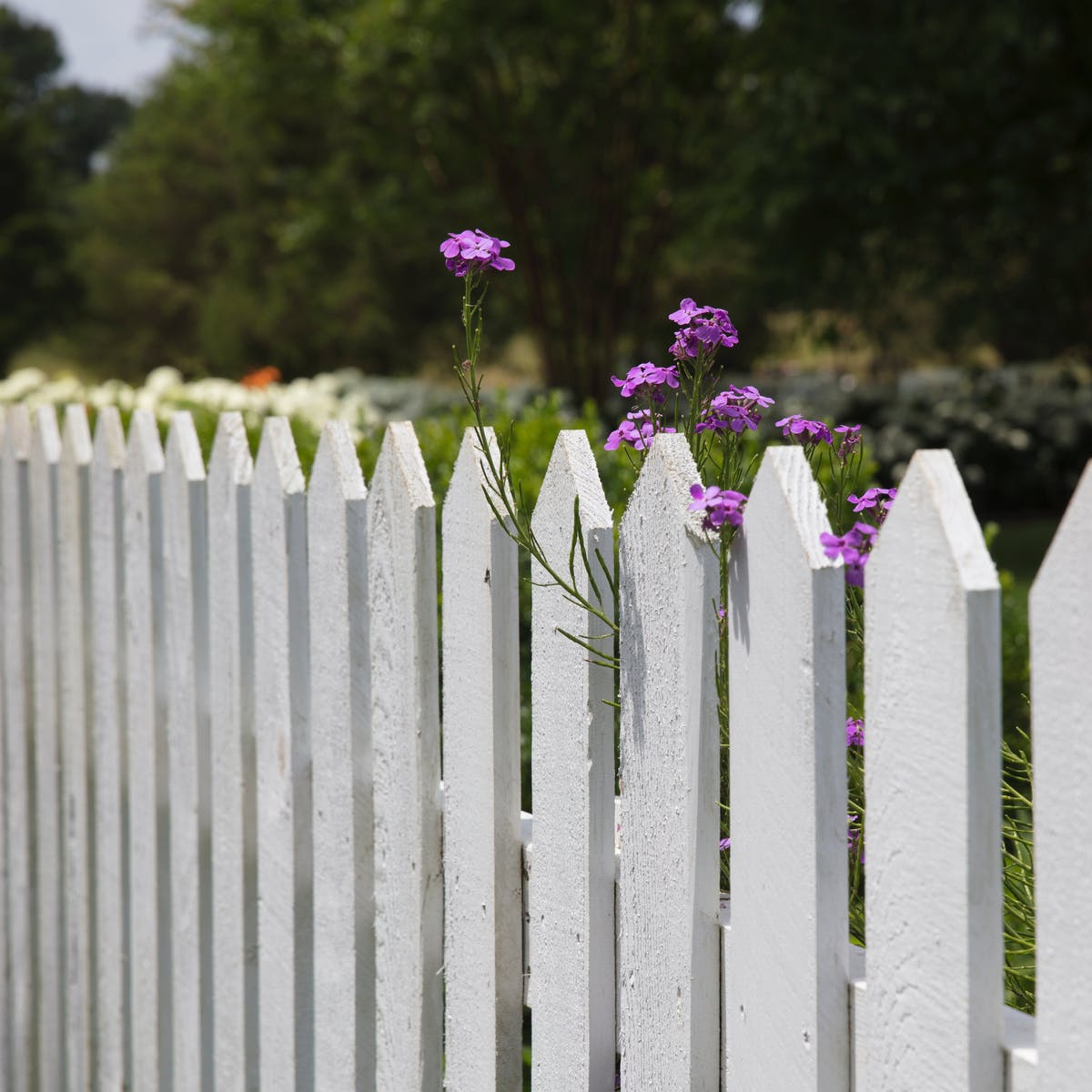 Demolish Your Front Fence It Would Be An Act Of Radical Kindness
