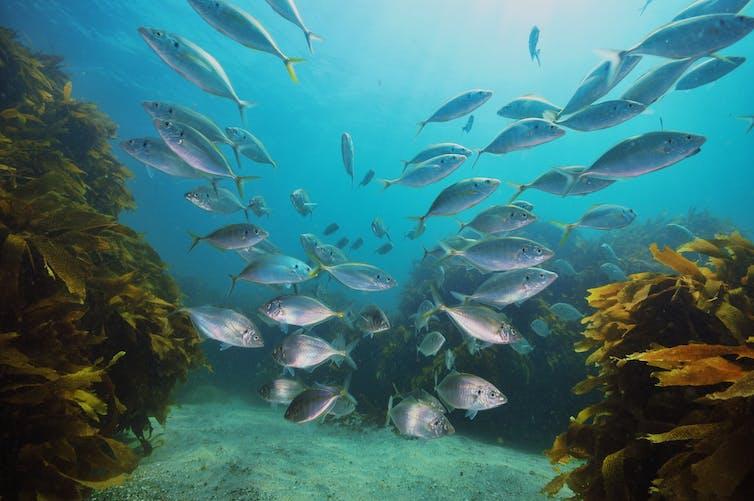 Study identifies nine research priorities to better understand NZ's vast marine area