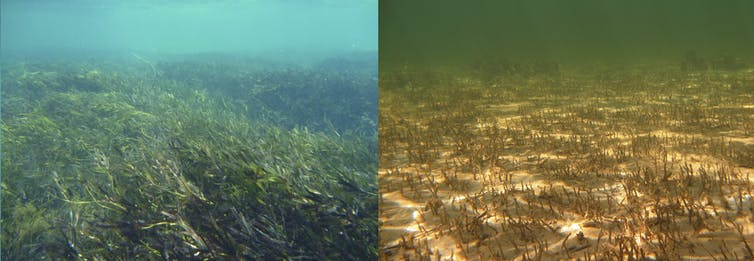 From Shark Bay seagrass to Stone Age Scotland, we can now assess climate risks to World Heritage