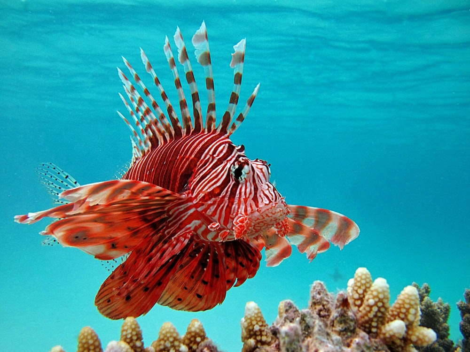 Fish Invasions of the Mediterranean Sea