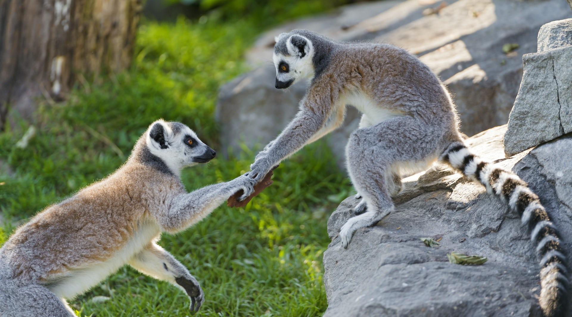 Mammal behavior traits of a sexual predator