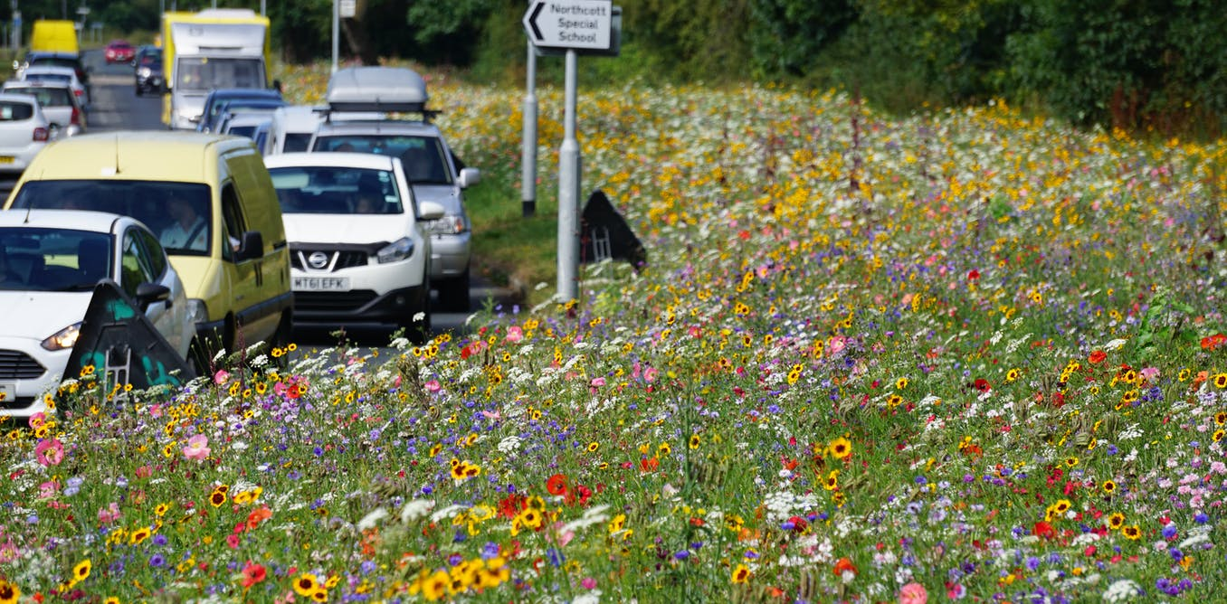 Roadside wildflower meadows are springing up across the UK – and they're helping wildlife in a big way