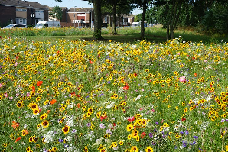Roadside Wildflower Meadows Are Springing Up Across The Uk And