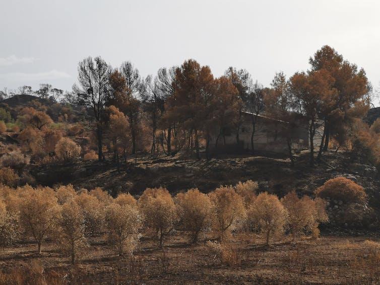 Los grandes incendios forestales crean problemas de seguridad en el territorio.Víctor Resco de Dios