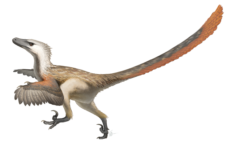 Curious Kids: did the velociraptors have feathers?