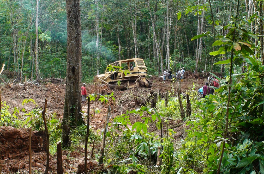 Tropical rainforests store huge amounts of carbon. So how can we protect them? Nigel Turvey