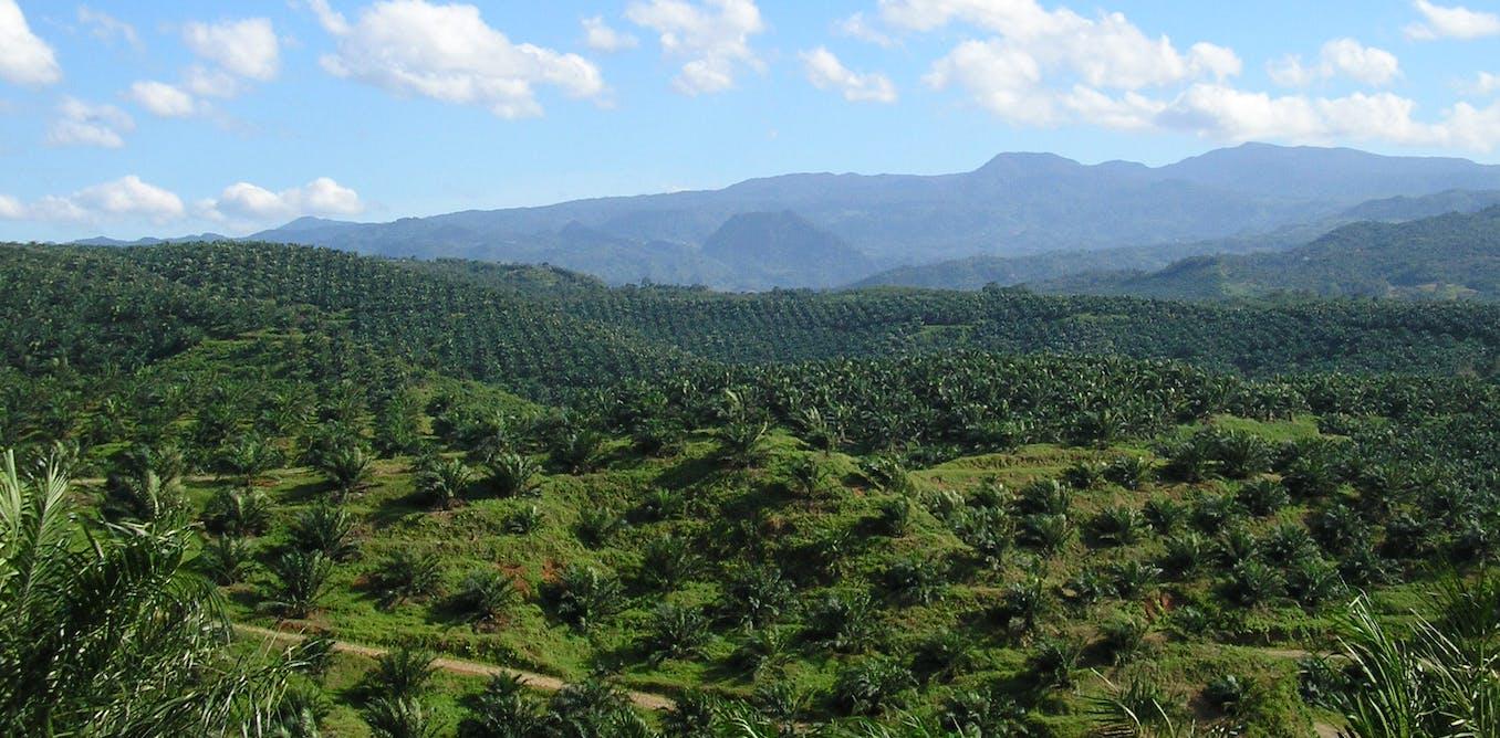 Politik dunia di balik pengembangan kelapa sawit Indonesia dan Malaysia