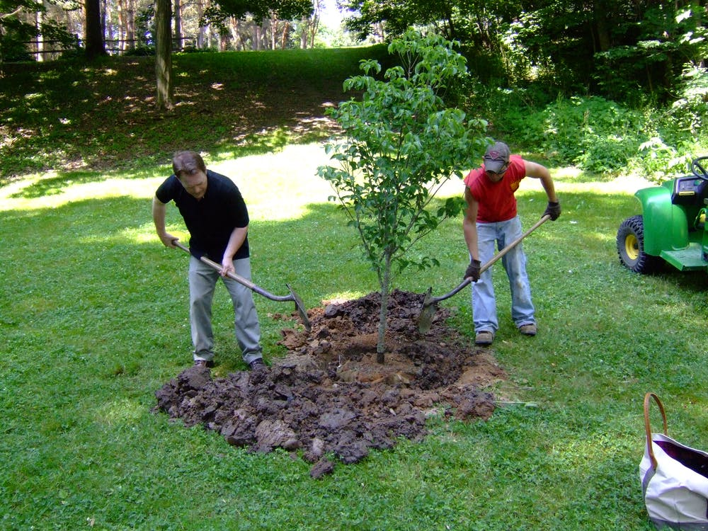2019: Increasing tree cover may be like a 'superfood' for community