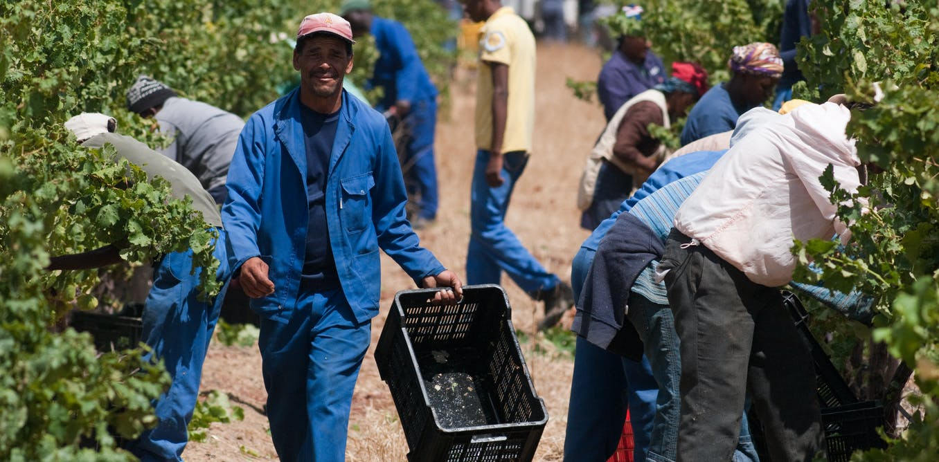 Young South Africans want to farm. But the system isn't ready for them