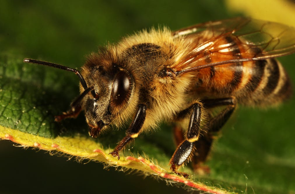 Give bees a chance: the ancient art of beekeeping could save