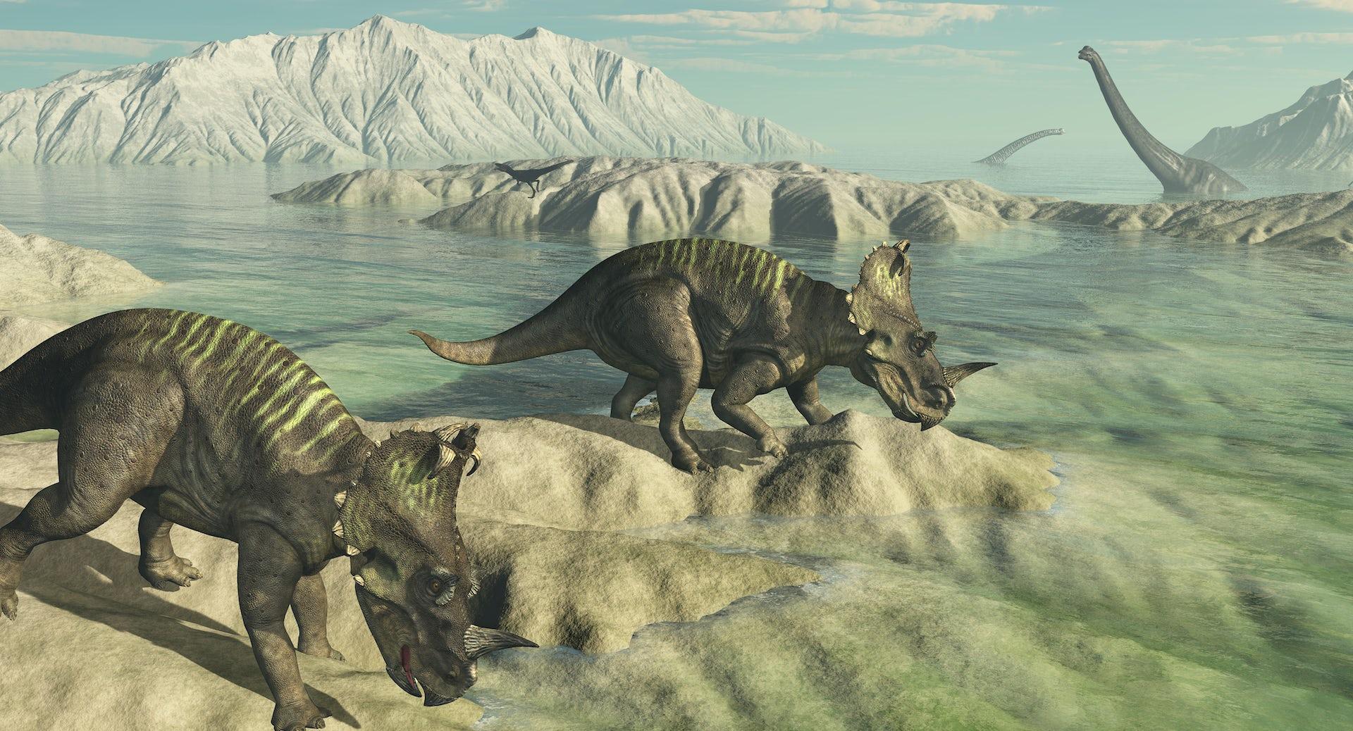 dating Dinosaur egg dating Peavey forsterkere