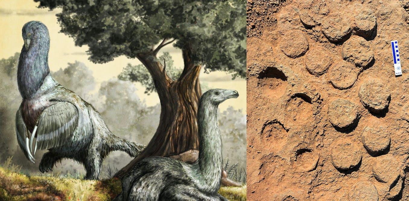 Dinosaur egg bonanza gives vital clues about prehistoric parenting