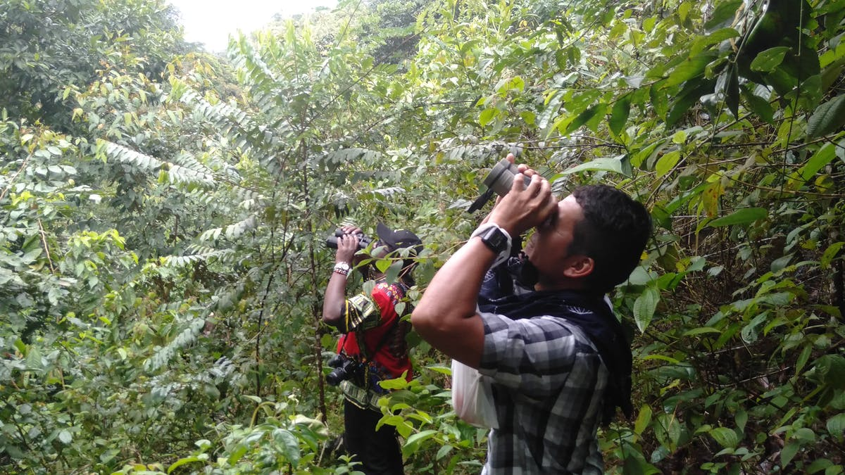Peace with nature: helping former Colombian guerrilla fighters to become citizen scientists