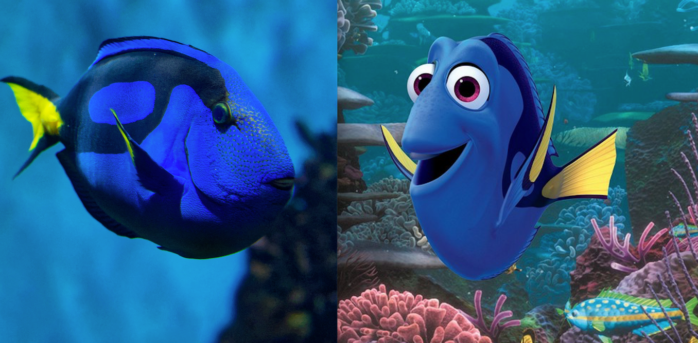 Finding Dory did not increase demand for pet fish despite viral ...