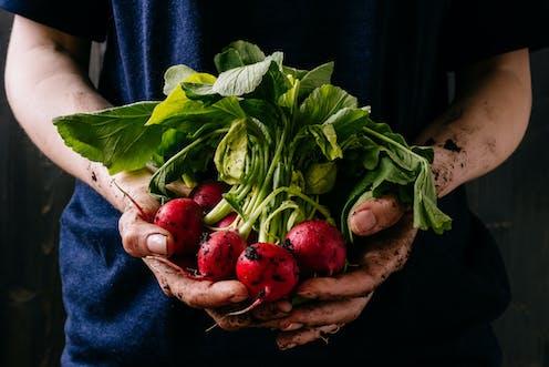 Manfaat Kesehatan daging organik