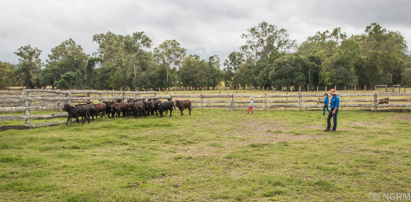 Logged out: farmers in Far North Queensland are being left behind by the digital economy