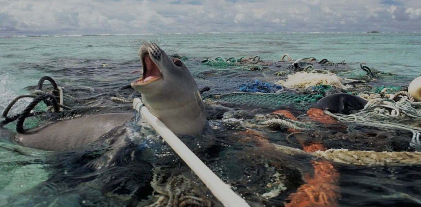 marine debris biodiversity impacts and potential solutions