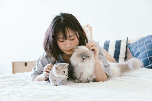Begini Cara Membelai Kucing Yang Tepat Agar Tidak Dicakar Menurut