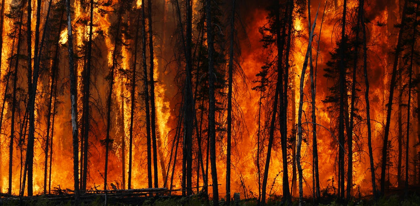 Increasing wildfires threaten to turn much of Northern Hemisphere's forests from vital carbon stores into climate heaters