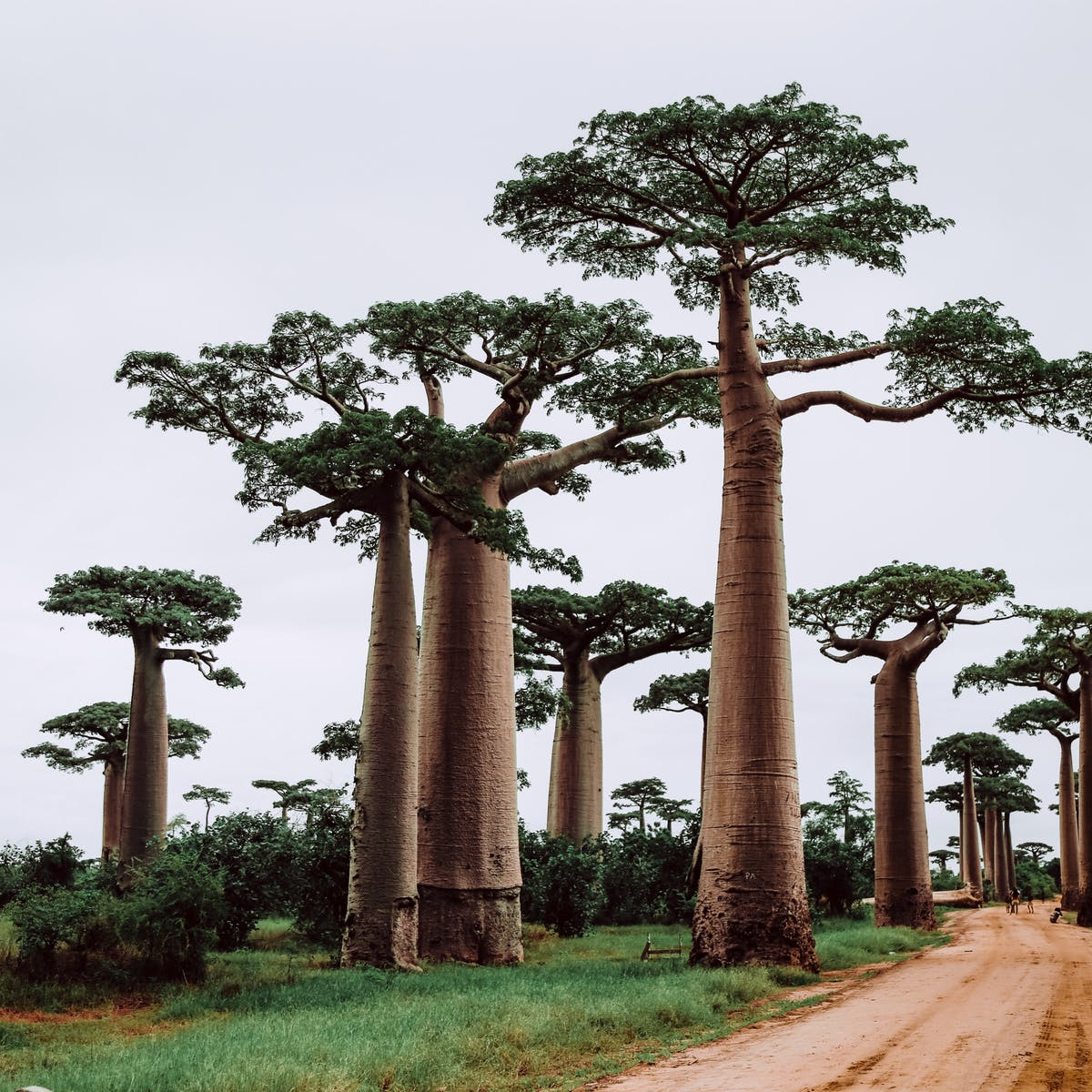 Plants Are Going Extinct Up To 350 Times Faster Than The Historical Norm