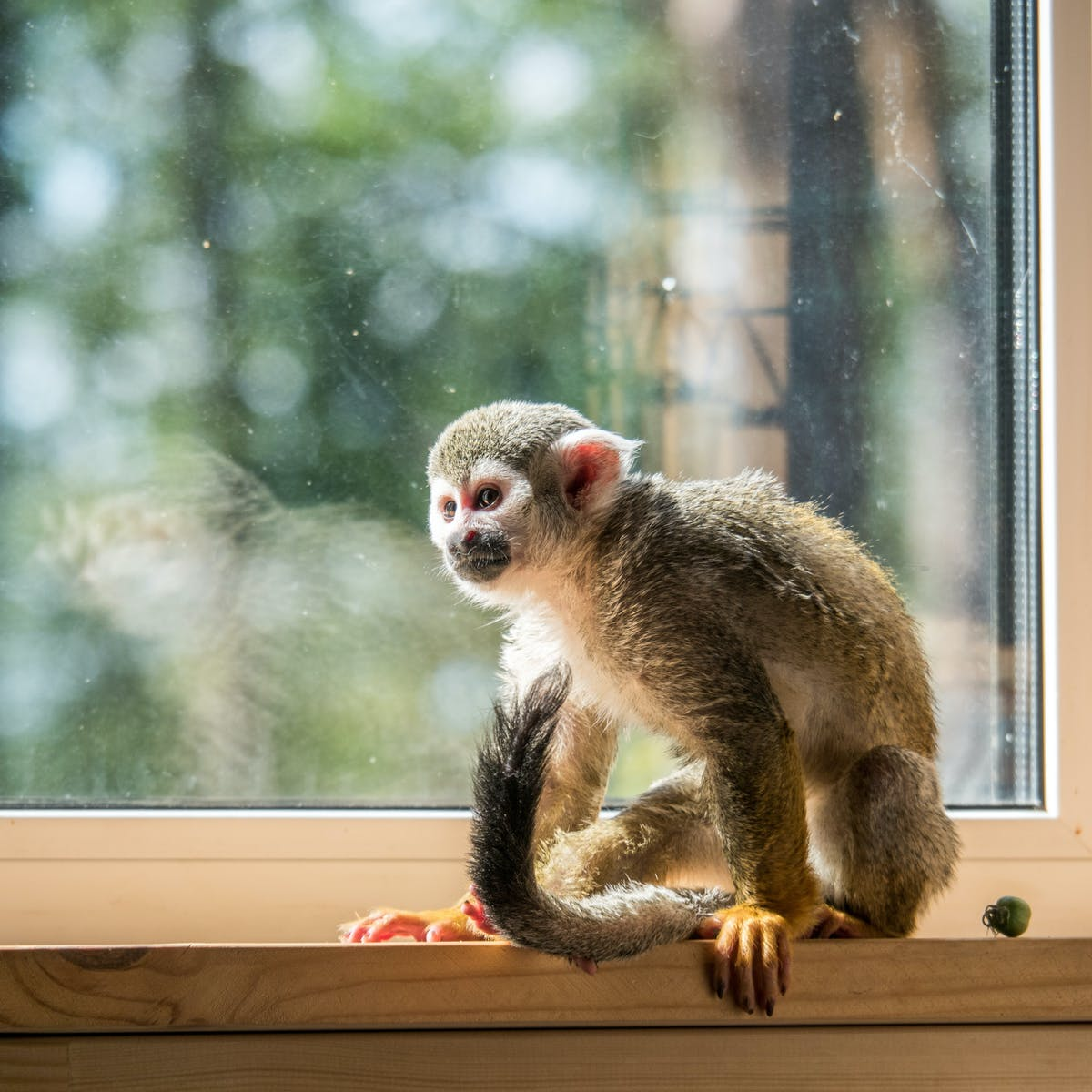 Keeping Monkeys As Pets Is Extraordinarily Cruel A Ban Is Long Overdue